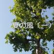 natsunokaze1